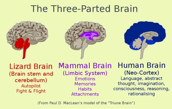 Site Dönüşümlerinizi Artıracak 6 Nöro Bilim Prensibi